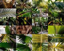 热带树叶摄影高清图片