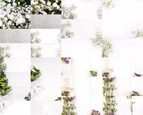 美丽的花朵封面摄影高清图片