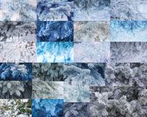 松樹雪枝攝影高清圖片