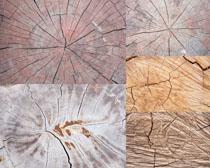 纹路木头摄影高清图片