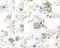 葉子花朵與禮物拍攝高清圖片