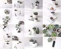 植物花盆攝影高清圖片