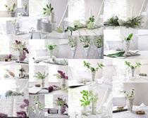 桌面上的装饰花朵摄影高清图片