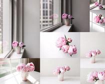 室内花朵展示摄影高清图片