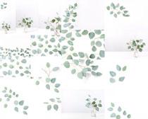 叶子植物背景摄影高清图片