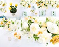 花朵与仙人掌摄影高清图片