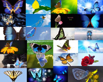 各种彩色蝴蝶摄影时时彩娱乐网站