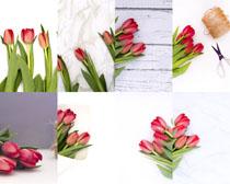 新鲜花朵展示摄影高清图片