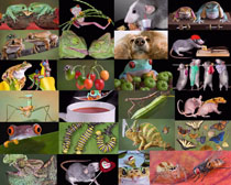 各种昆虫摄影高清图片