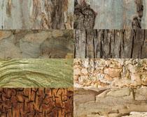 树木纹理背景摄影高清图片