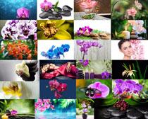 小石子与花朵摄影高清图片