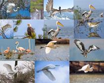 海边鸟类摄影时时彩娱乐网站