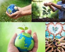 环保与关爱植物摄影高清图片