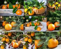 橙子水果摄影高清图片