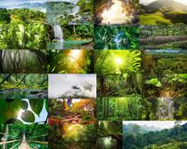 植物森林風景攝影高清圖片