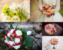 漂亮的色彩玫瑰摄影高清图片