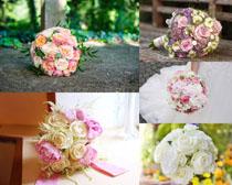 漂亮的一束玫瑰花朵摄影高清图片