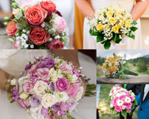 一束美丽的玫瑰花朵摄影高清图片