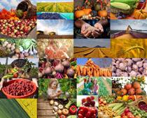 蔬菜水果丰收摄影高清图片