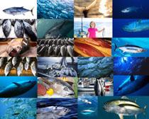 海洋魚類攝影高清圖片