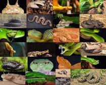 蛇动物摄影高清图片