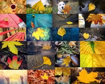 秋天的葉子攝影高清圖片