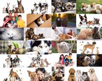 可爱狗狗与猫咪摄影高清图片