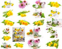 花朵与药罐摄影高清图片