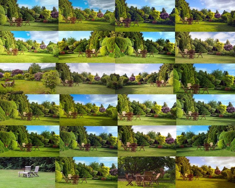 植物草地攝影高清圖片