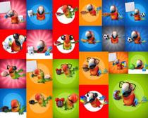 卡通鹦鹉摄影高清图片