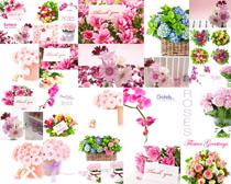 漂亮的花朵装饰物摄影高清图片