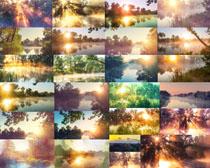 阳光树木风景摄影高清图片