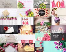 母親節花朵節日拍攝高清圖片