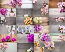 木板上的花瓣摄影高清图片