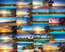 海边风景树木摄影高清图片