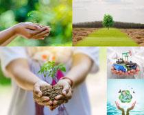 土壤樹苗雙手攝影高清圖片