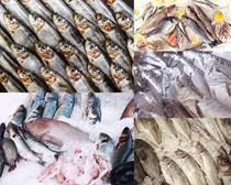 冰海鲜海鱼摄影高清图片