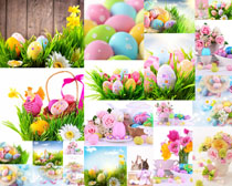 藝術彩蛋與花朵攝影高清圖片