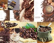 原料咖啡果摄影高清图片