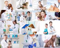 职业宠物医生摄影高清图片