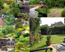 別墅景觀植物攝影高清圖片