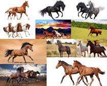 飞奔的马摄影高清图片