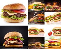 汉堡包西红柿摄影高清图片