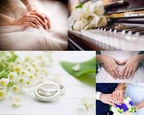 夫妻雙手與戒指攝影高清圖片