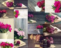 书本与花朵展示摄影高清图片