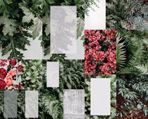 花朵叶子相框摄影高清图片