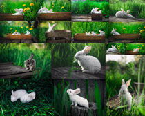 小兔子花草攝影高清圖片