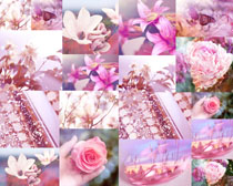 漂亮的春天花朵摄影高清图片