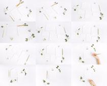 纸张绘画与花朵摄影高清图片