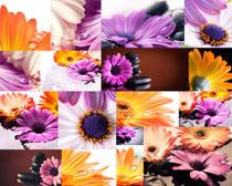 鲜艳的花朵写真拍摄高清图片